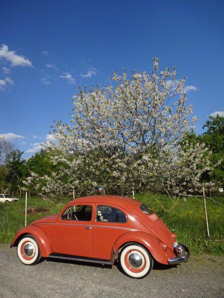 Coccinelle Volkswagen 1955-2054